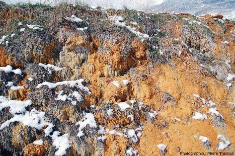Concrétions carbonato-ferrugineuses sur les flancs externes de la levée issue de la Source de la Rotonde, Plan de Phazy (Hautes-Alpes)