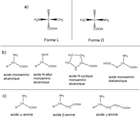 Les acides aminés dans les météorites