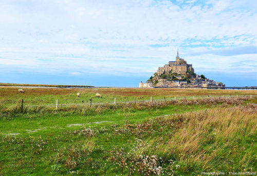 Vue du Mont-Saint-Michel depuis la côte, avec vue sur les schorres (herbus ou prés-salés)