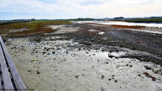 La tangue, substrat sableux des schorres de bord de mer