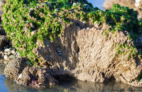 Vue de détail d'un récif à hermelles