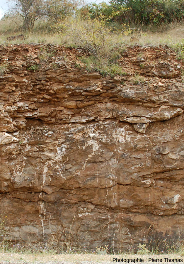 Réseau de filons hydrothermaux verticaux terrestres ressemblant aux filons martiens de Salsberry Peak