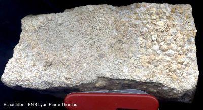 Exemple un échantillon avec oolite a gauche et pisolite à droite (Montaigut le Blin, 03)