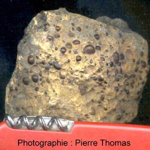 Pisolites de limonite dans des échantillons jurassiques lorrains