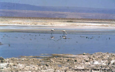 Vue générale du site du salar d'Atacama (Chili)