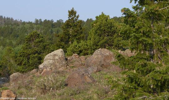 Larges rochers volcaniques (basaltes et andésites, principalement) au sommet de la Boulder Mountain (Utah, États-Unis d'Amérique), à l'Ouest du Parc national de Capitol Reef