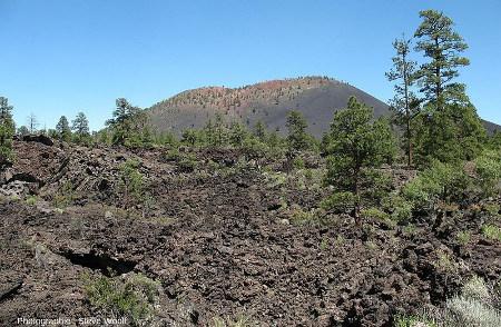 Vue du Sunset Crater, le plus jeune édifice du San Francisco Volcanic Field au Nord de Flagstaff (Arizona, États-Unis d'Amérique)