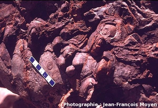 Stromatolites fossiles vieux de 3,5 Ga, Pilbara, Australie