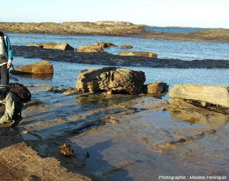 Troncs de Glossoptéris couchés par la déferlante volcanique approximativement orienté Est-Ouest, Swansea Heads (Australie)