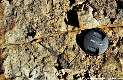 Bryozoaires, Brachiopodes, morceaux de Crinoïdes et petits Bivalves, carrière de Mulbring (Australie)