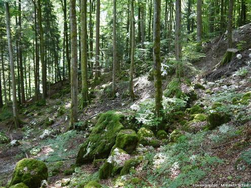 Vue de la descente dans la forêt (hêtraie-sapinière) qui précède la visite touristique des Gorges du Pont du Diable