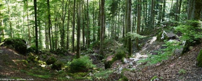 Vue panoramique de la descente dans la forêt (hêtraie-sapinière) qui précède la visite touristique des Gorges du Pont du Diable
