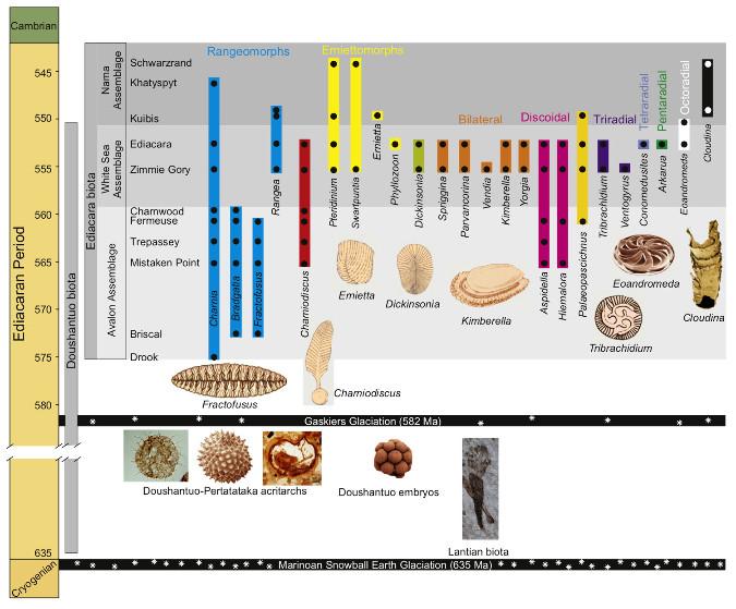 Distribution temporelle (barres) et enregistrement stratigraphique (disques) des genres caractéristiques de l'Édiacarien