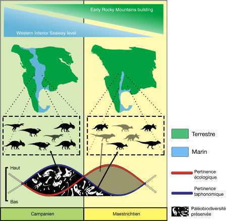 Principe du biais d'enregistrement de la paléo-biodiversité des dinosaures d'Amérique du Nord à la fin du Crétacé