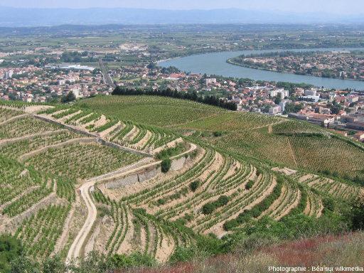 Le vignoble de Tain l'Hermitage