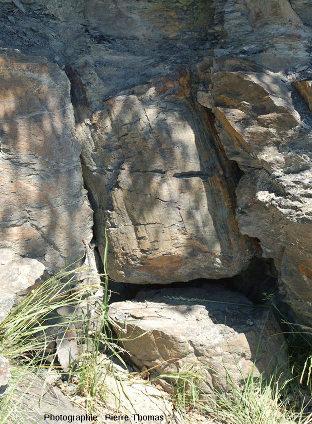 Tronc d'arbre fossile en place à la Combarine