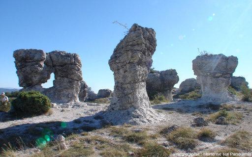 Les Mourres, un«champ de morilles géantes»