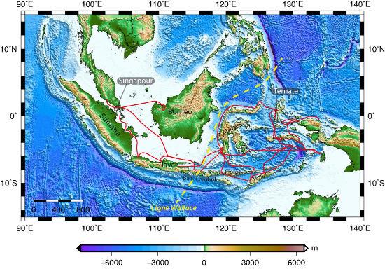Les multiples pérégrinations de Wallace (en rouge) à travers l'archipel indo-malais, de 1854 à 1862, et la limite biogéographique identifiée par Wallace (tirets jaunes)