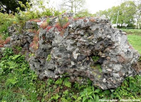 Reste de mur vitrifié, dégagé de sa couverture végétale