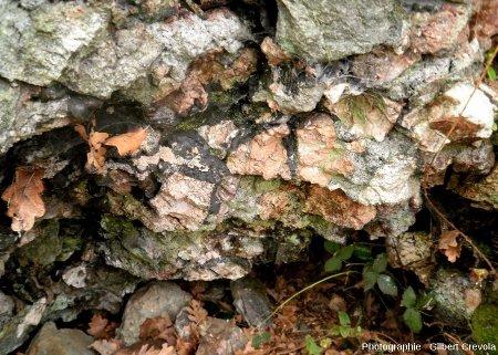 Fractures injectées par du verre sombre dans un bloc de quartz à patine rose