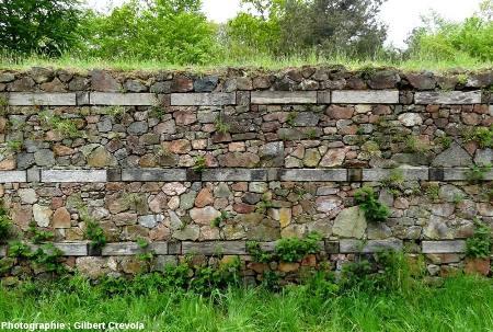 Portion demurus gallicus reconstitué à Péran par le Centre des Monuments Historiques