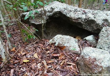 Taffonis frustres de la côte Nord-Est de Terre-de-Bas, Guadeloupe