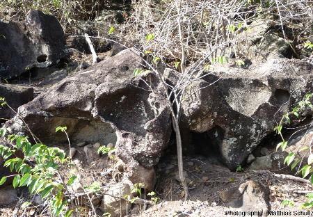 Taffonis plus élaborés de la côte Sud-Est de Terre-de-Bas, Guadeloupe