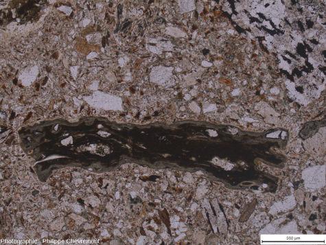 Lame mince de suévite de type Chassenon, avec un fragment de verre isotrope, de teinte verte à brun vert (au milieu), et un élément de gneiss (en haut à droite) dans une matrice clastique - LPNA
