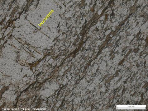 Réseau de microfissures suborthogonales à la foliation dans un paragneiss légèrement anatectique, à environ 5km au NW du centre de l'astroblème