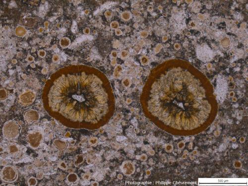 Impactite de type Babaudus riche en vacuoles remplies de minéraux - LPNA