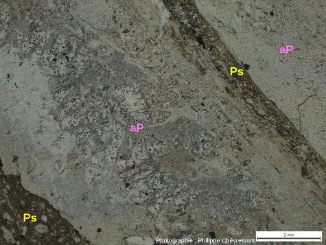 Veines de pseudotachylite (Ps) aux épontes d'une aplito-pegmatite (aP), dans la carrière de Champagnac - LPNA