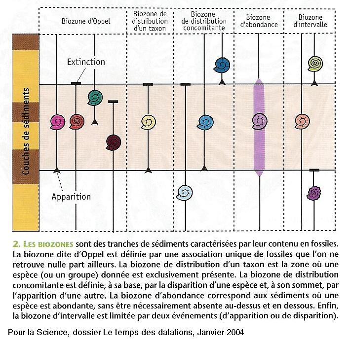 Exemple de schéma explicatif de la notion de biozone, représentant les espèces fossiles en «stase»