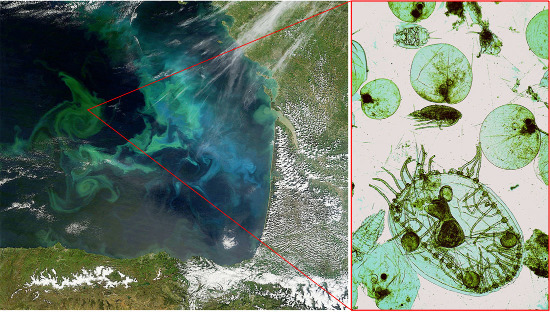 Bloom planctionique et plancton