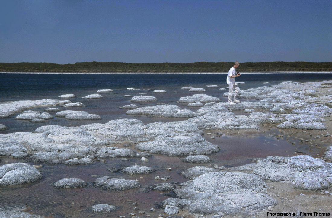 Les stromatolithes du lac Thetis (Australie), exemple actuel de précipitation biogène indirecte de CaCO3