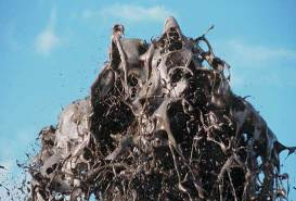 Éruption de natro-carbonatites, la très faible viscosité de ces laves est manifeste (Oldoinyo Lengaï)