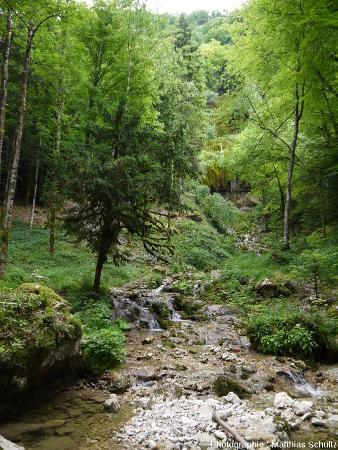 Une cascade de travertin (ou tufière) en rive gauche du Hérisson