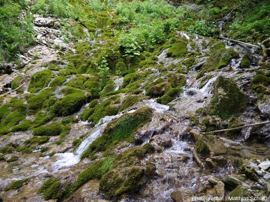 Dépôts de carbonates dans le lit de l'affluent en rive gauche du Hérisson