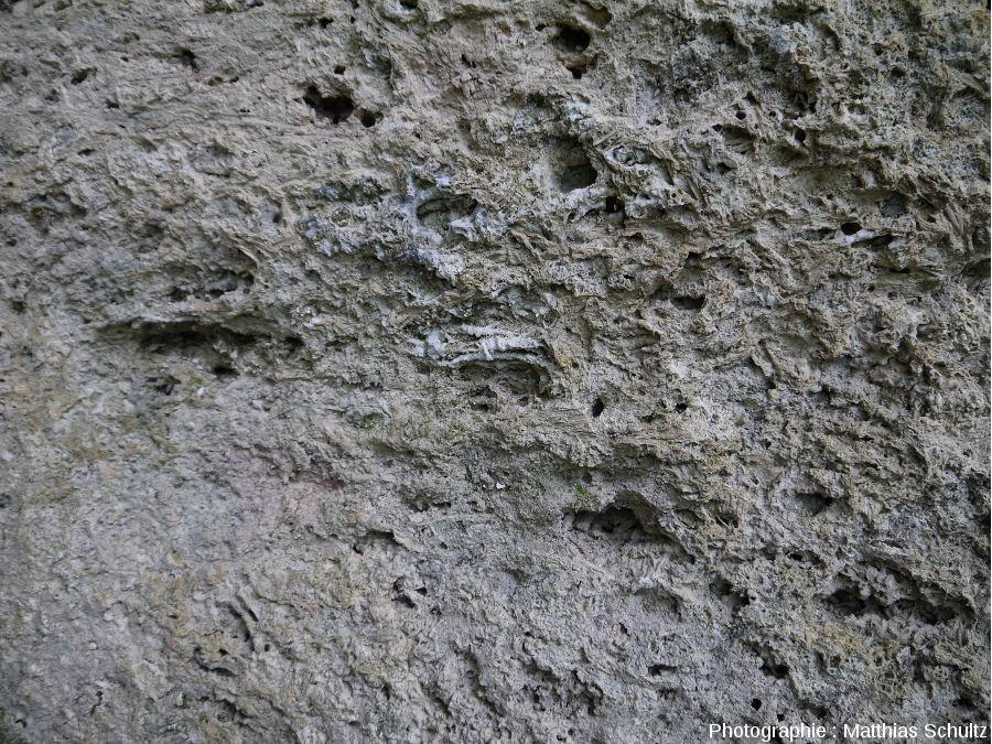 Détail d'un bloc de travertin (ou tuf calcaire) dans le lit du Hérisson