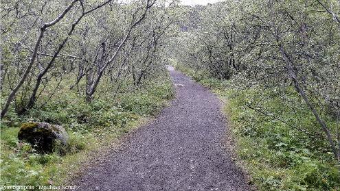 Le fond d'Ásbyrgi côté amont (Sud), Nord-Est de l'Islande