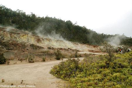 Champ géothermal au milieu de la végétation tropicale à Hawaï