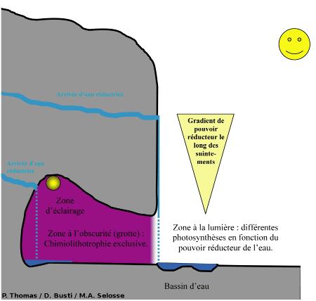 Coupe schématique des grottes du Cornadore montrant les zones d'arrivée d'eau contenant des substances réductrices