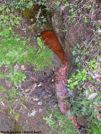 La petite source de la Tète de Lion, 50m au NE de la source principale