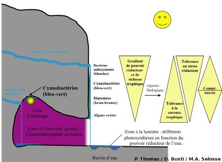 Zonation des communautés bactériennes et d'algues le long des suintements