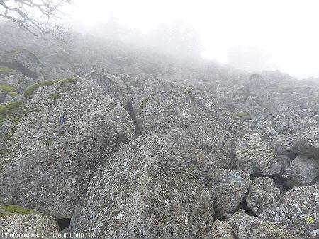 Vue de quelques blocs du chirat embrumé de Saint-Sabin, l'un des chirats aux blocs les plus gros