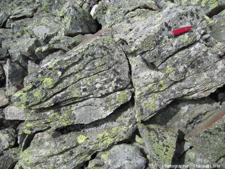 Figures de gélifraction (ou cryoclastie) sur un bloc rocheux du chirat du Crêt de Botte