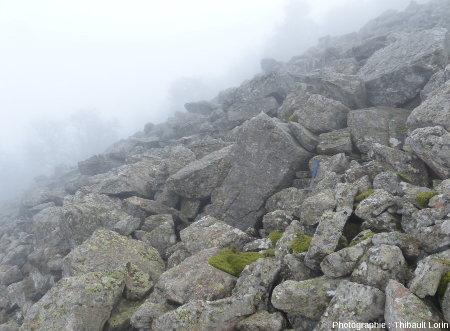 En surface, le chirat est sec, et n'est propice qu'au développement de quelques lichens