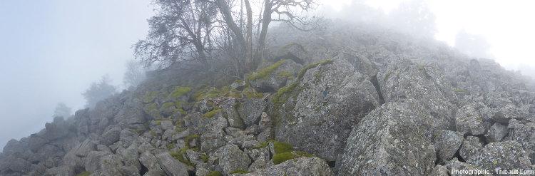 Exemple de facilitation écologique, les mousses permettent la formation d'une mince couche de sol propice au développement des arbustes (ici un sorbier des oiseleurs se distingue dans la brume hivernale)