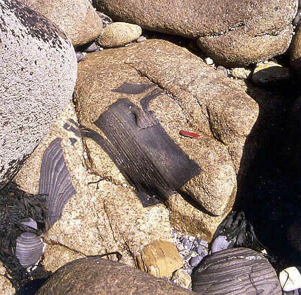 Granite de Ploumanach'