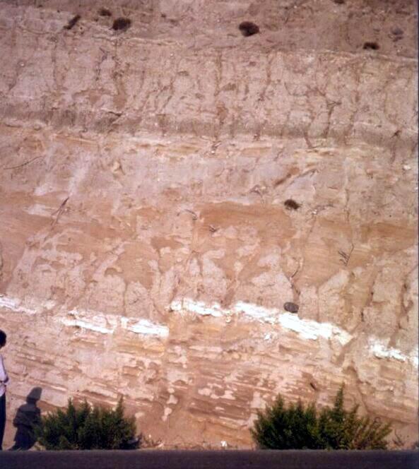Terrains pliocènes (Grèce)