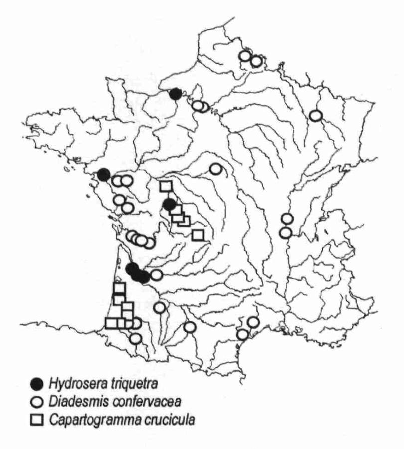 Distribution actuelle (en 1999-2000) en France de différentes espèces de diatomées thermophyles d'origines tropicales